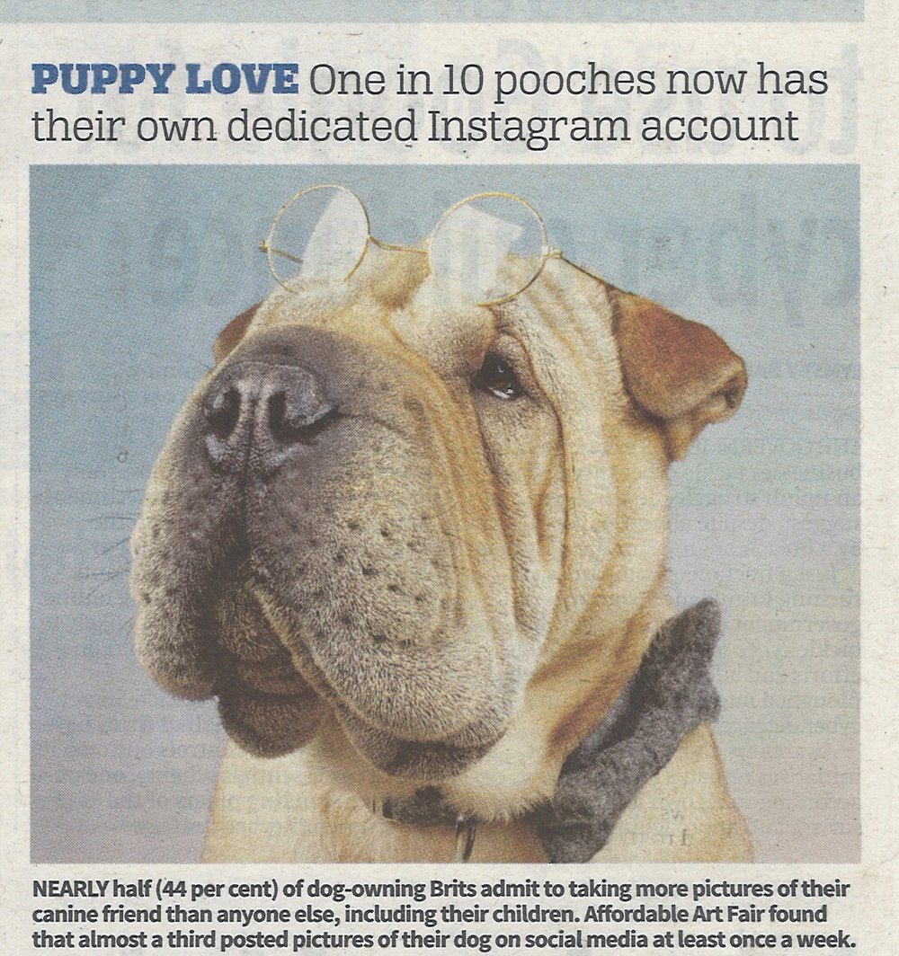 Instagram dog  @professorwrinkles  in City AM