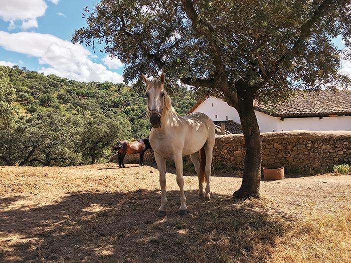 Andalusier Finca Dehasa