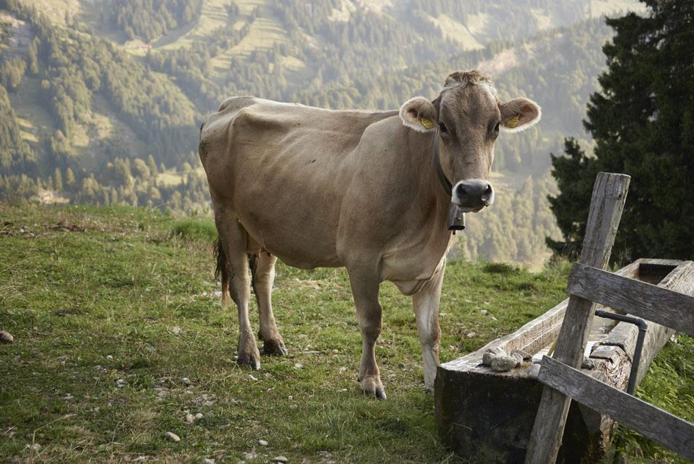 BROTZEIT IM BREGENZER WALD - Manu hat von ihrem Besuch auf der Alpe Helmingen und Alpe Lacheerzählt.