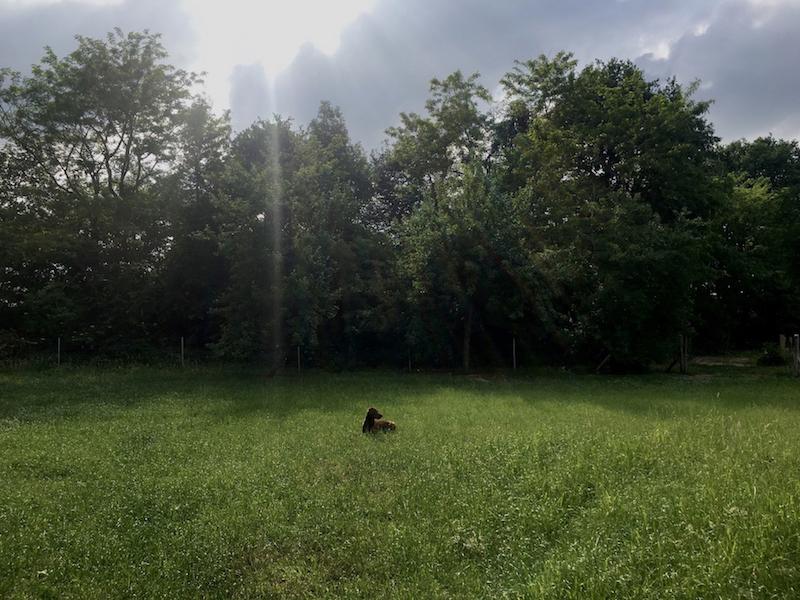 landleben-labrador-lotti.jpg
