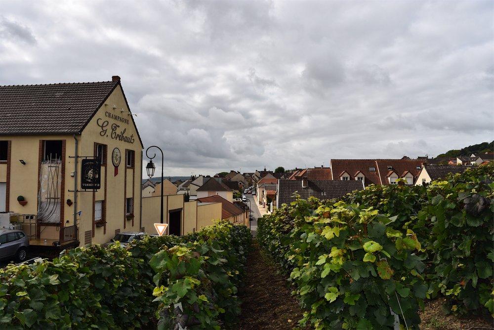 Pinot noir, pinot meunier and chardonnay grapes