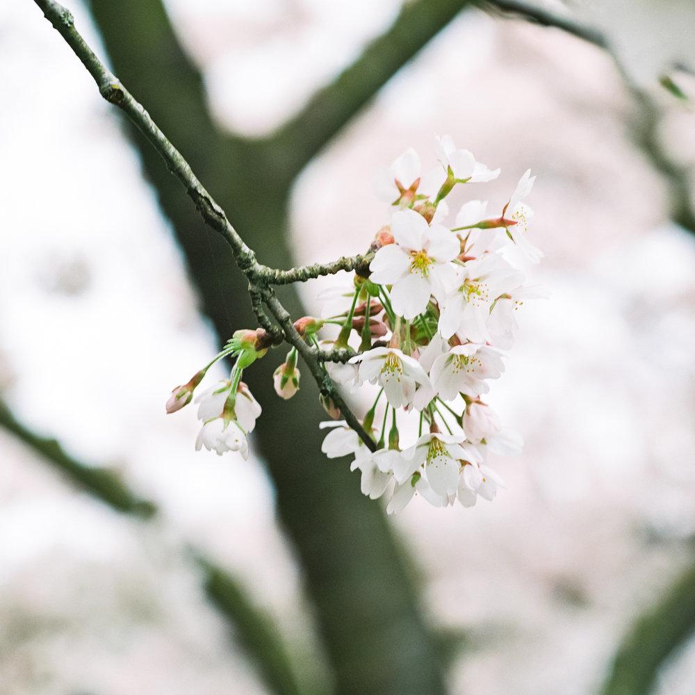 Week 15 - Blossom-000002.jpg