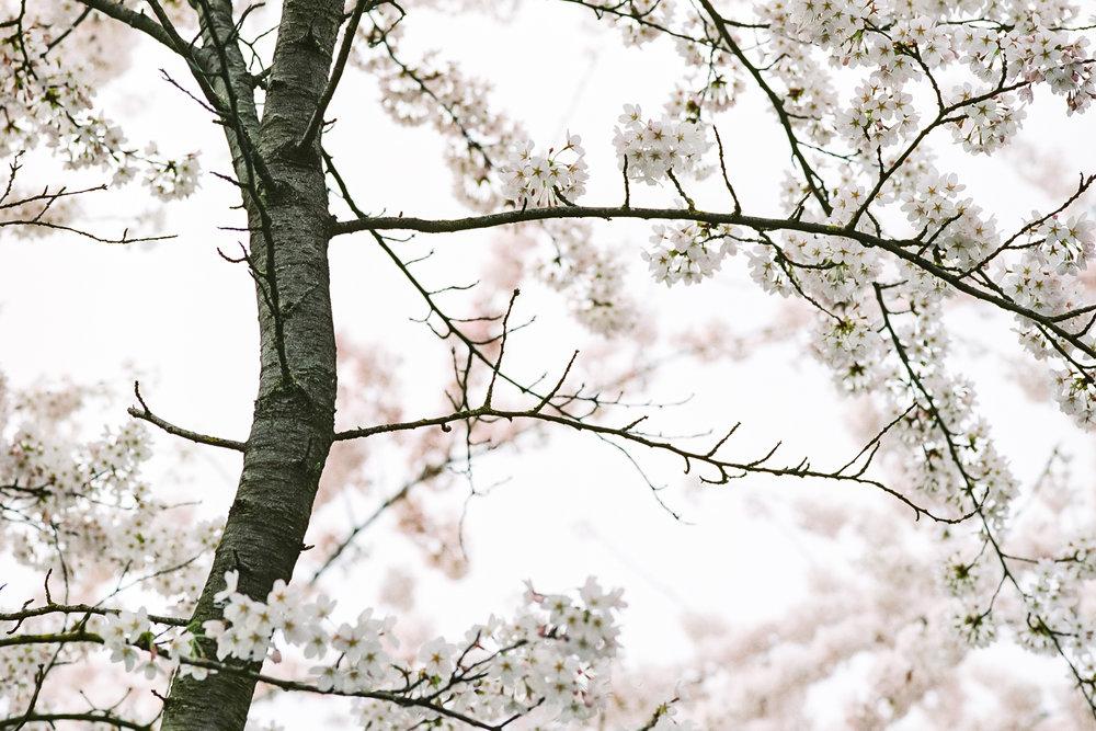 Week 15 - Blossom-000004.jpg