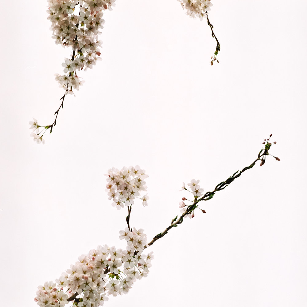 Week 15 - Blossom-000005.jpg