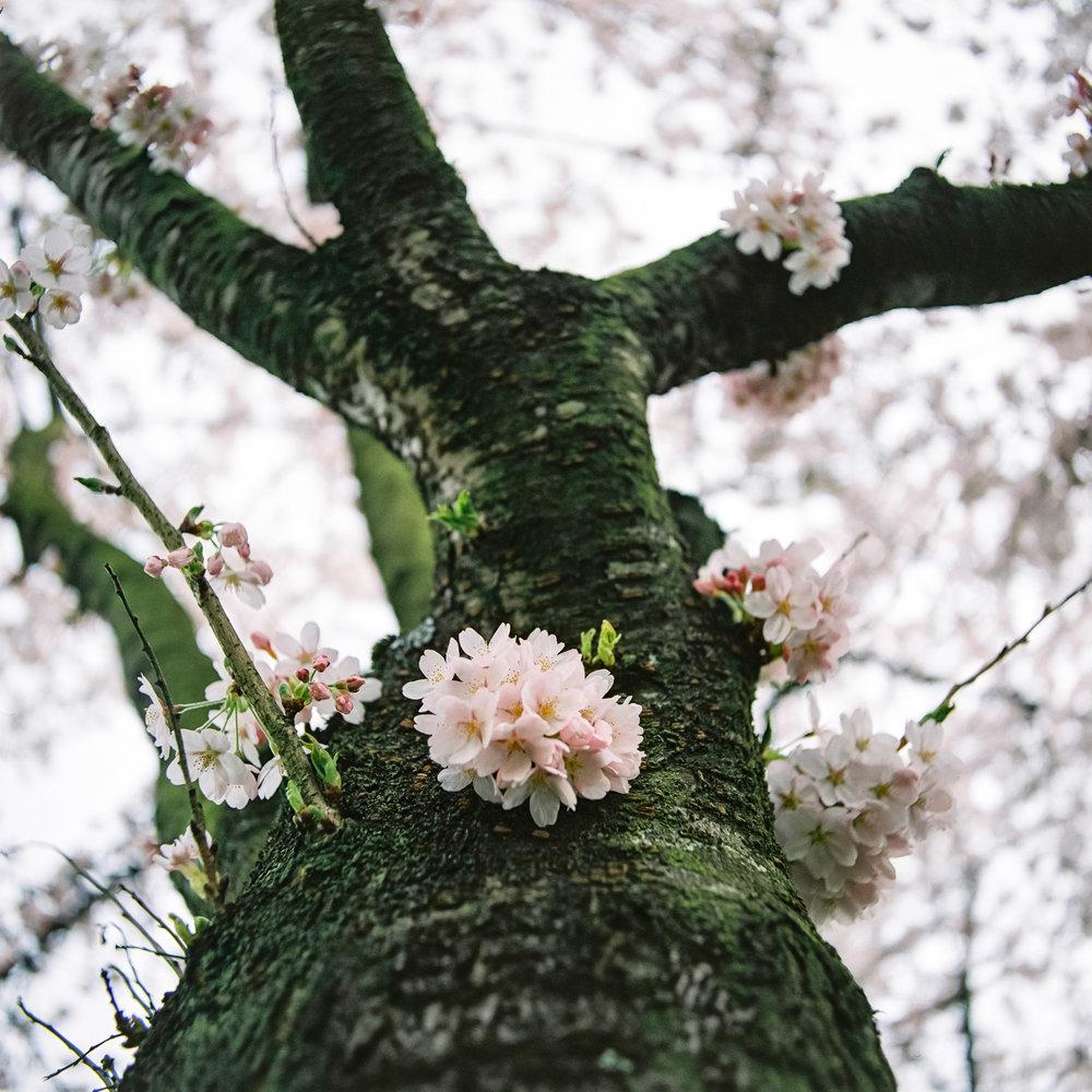Week 15 - Blossom-000010.jpg