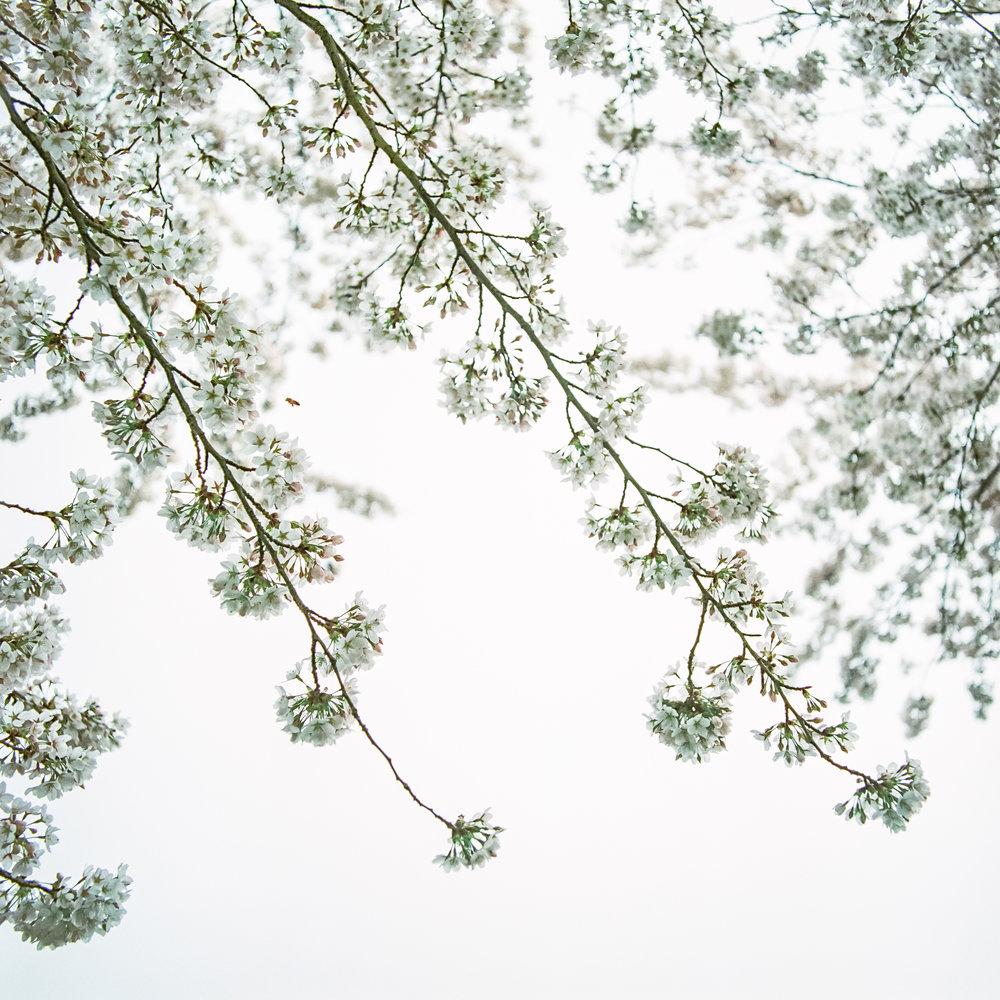Week 15 - Blossom-000011.jpg