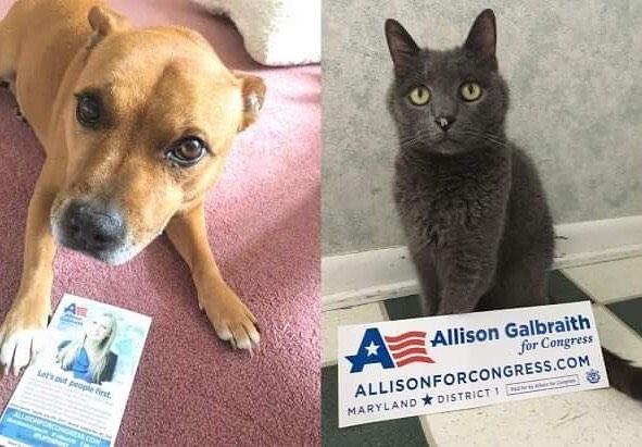 Pets are huge Allison fans. How's that for bi-pawtisanship?