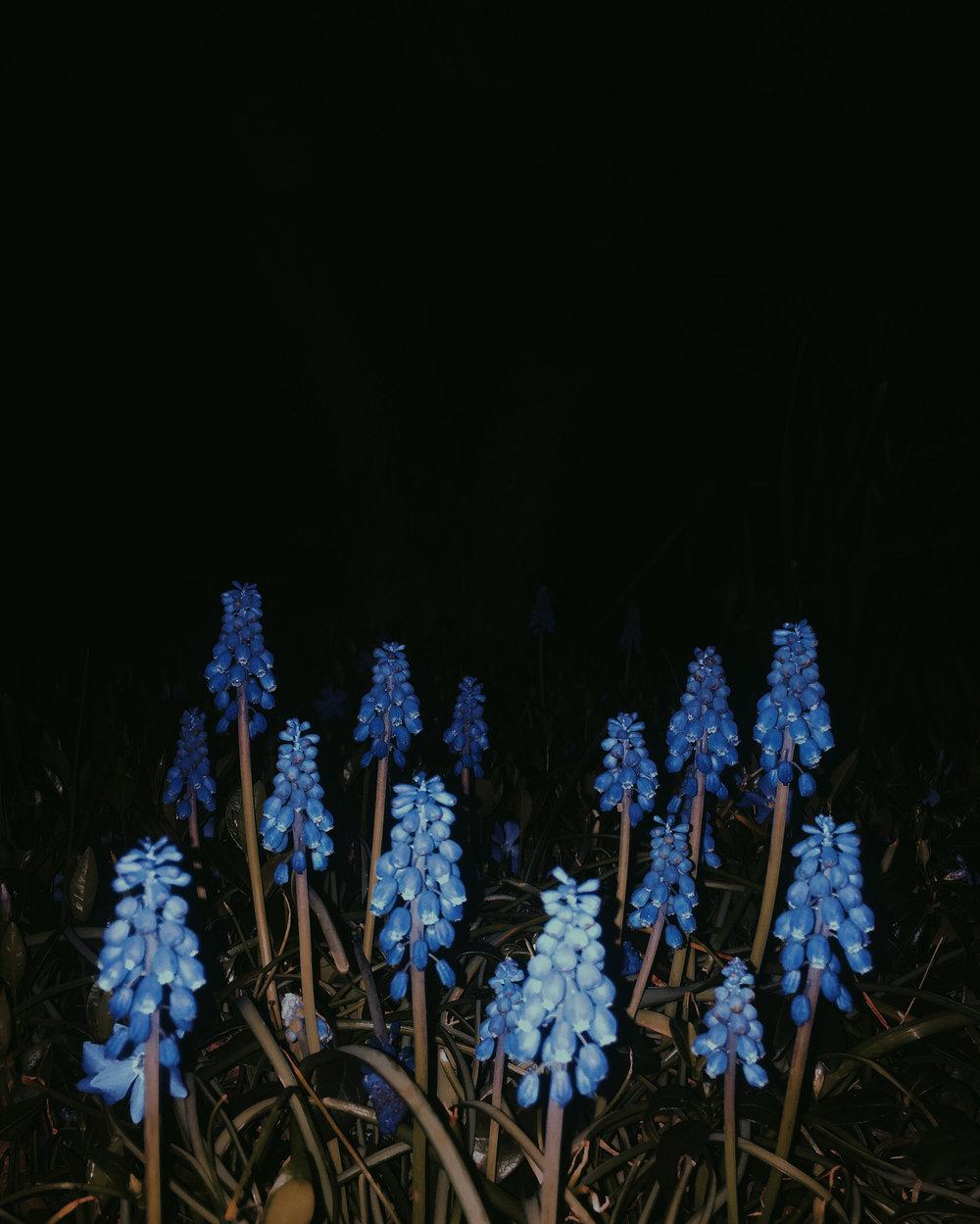 blue_flowers.jpg
