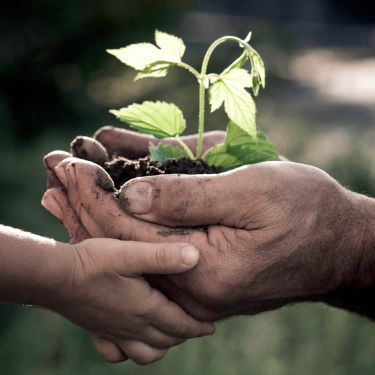 Free Fruit Tree Distribution Fund