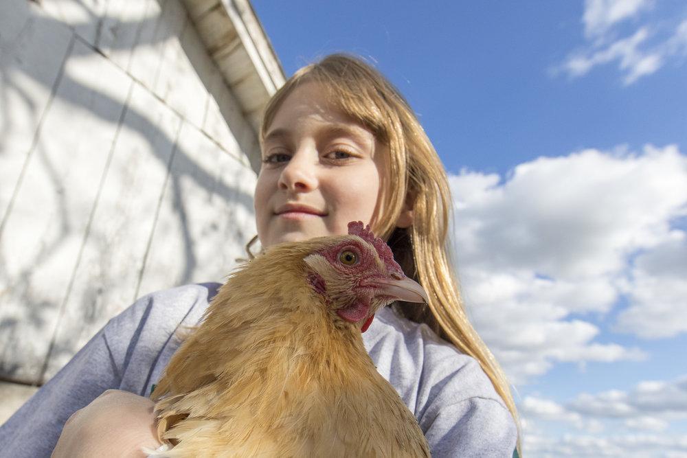 4-H Ag Chicken-1.jpg