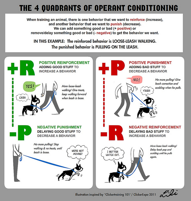 4 q's of operant conditioning.jpg