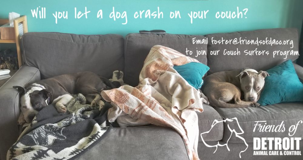 We are accepting Couch Surfer applications at all times! Please email foster@friendsofdacc.org if you're interested in helping a shelter dog adjust to home life on their way to forever.