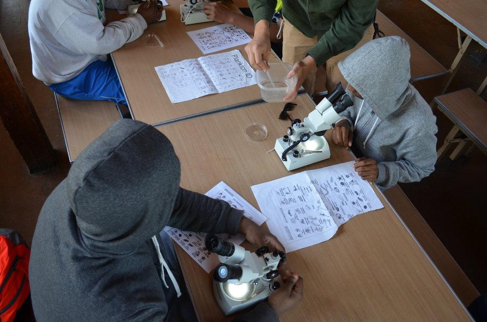 Looking at microorganisms