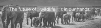 world wildlife day rainforest