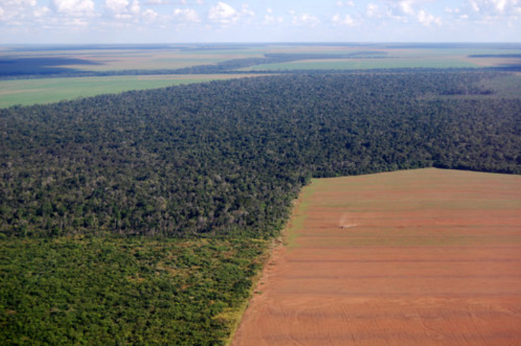 Here's an aerial image of a large soy field in the middle of the rainforest.