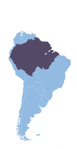 Map of the region in South America where we source our ethical acai