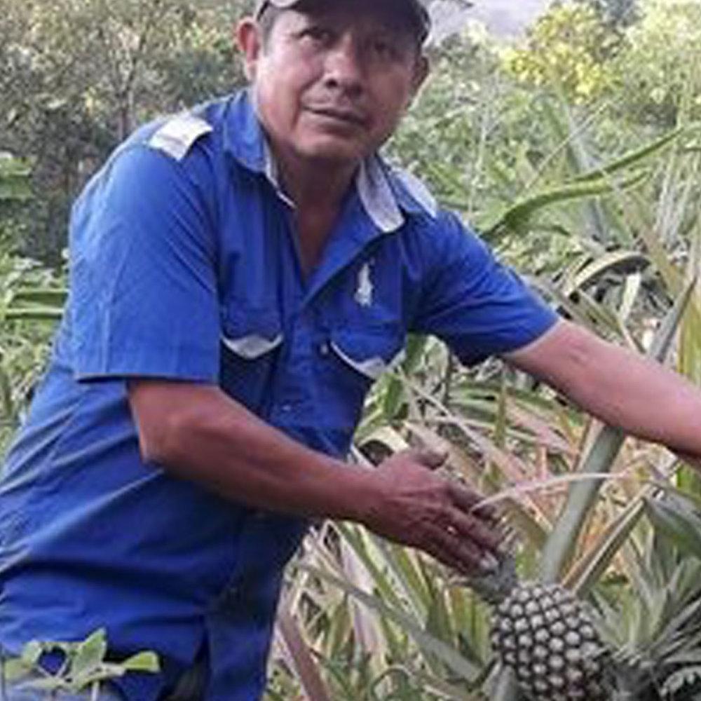 pf-amazon-worker-pineapple.jpg