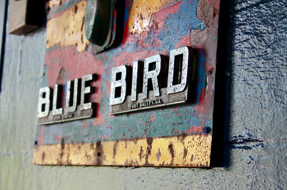 mbar_bluebird_2.jpg