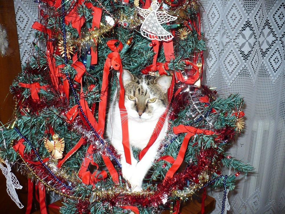 cat-981269_1920.jpg