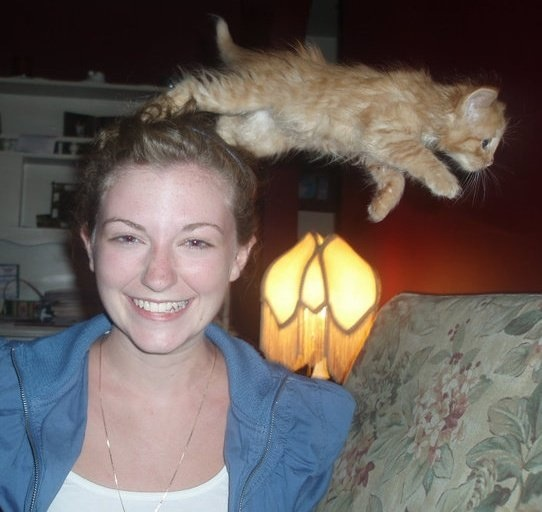 flying-cat-photobomb