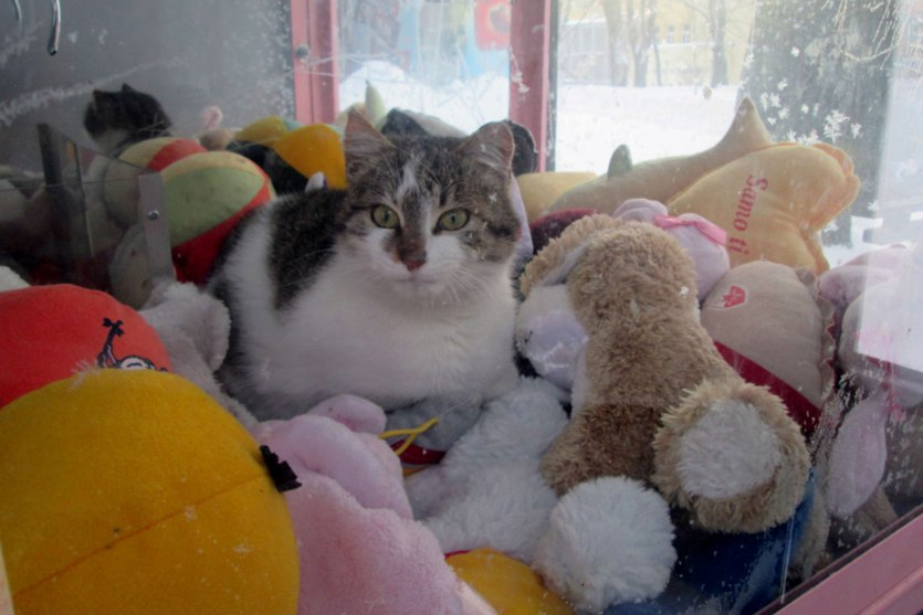 cat_hides_from_cold_in_a_vending_machine_for_stuffed_toys-1.jpg