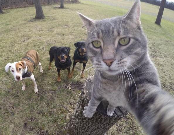 manny-the-selfie-cat-yoremahm-3-e1452853437184.jpg