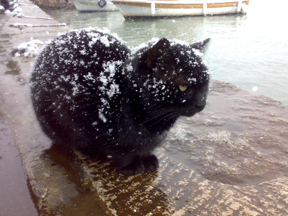 Black_cat_being_snowed_on.jpg