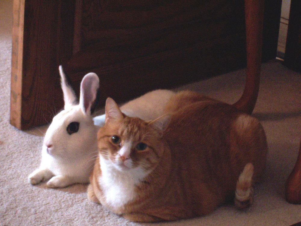 Cat_and_rabbit_sitting_together.jpg