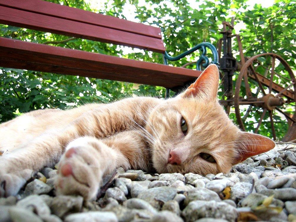 Katze_in_beaufort-en-argonne.jpg