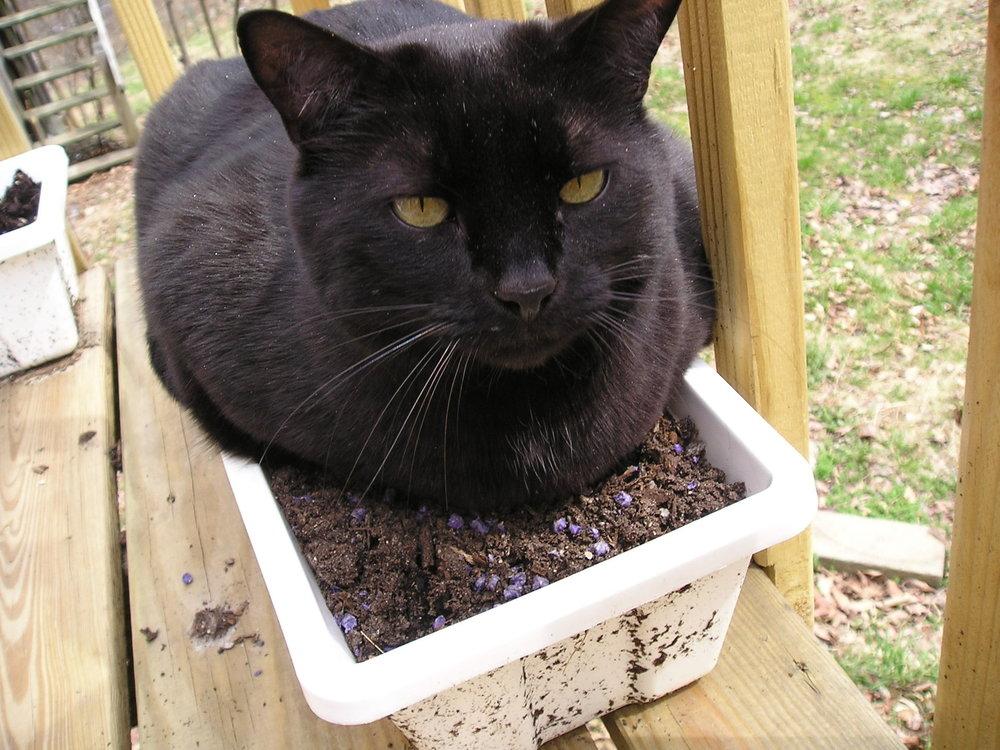 Thunder_black_cat.jpg