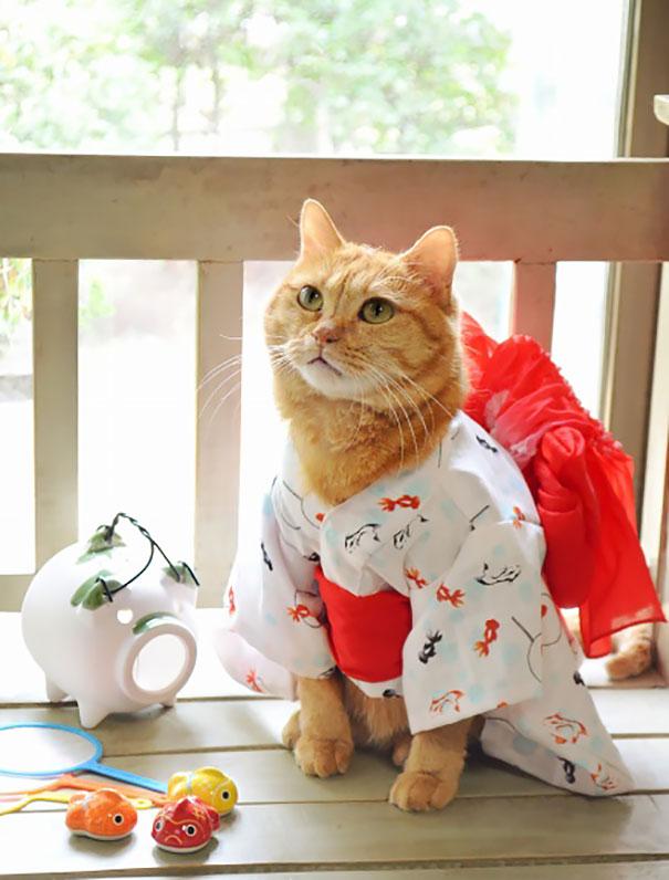 cat-kimonos-japan-21__605.jpg