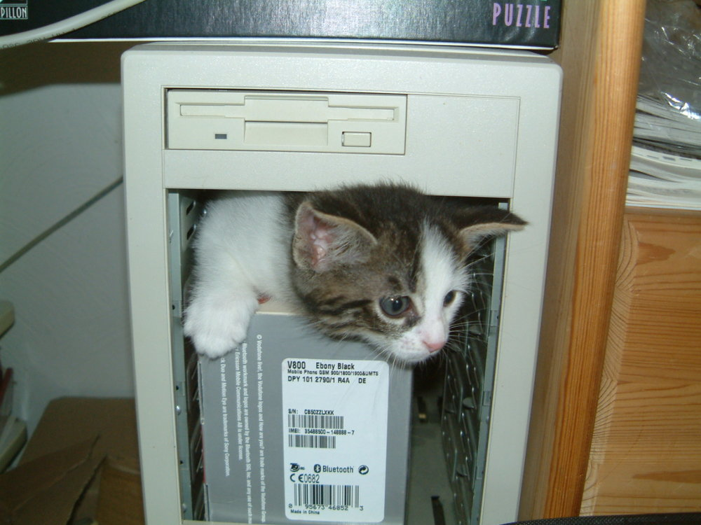 Computer-kitten.jpg