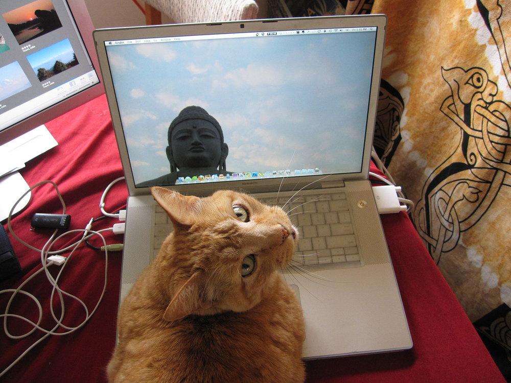 Computer_Using_Cat.jpg