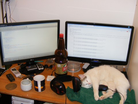 Funny-Cat_A-cat-at-work_63172-480x360_4791796627.jpg