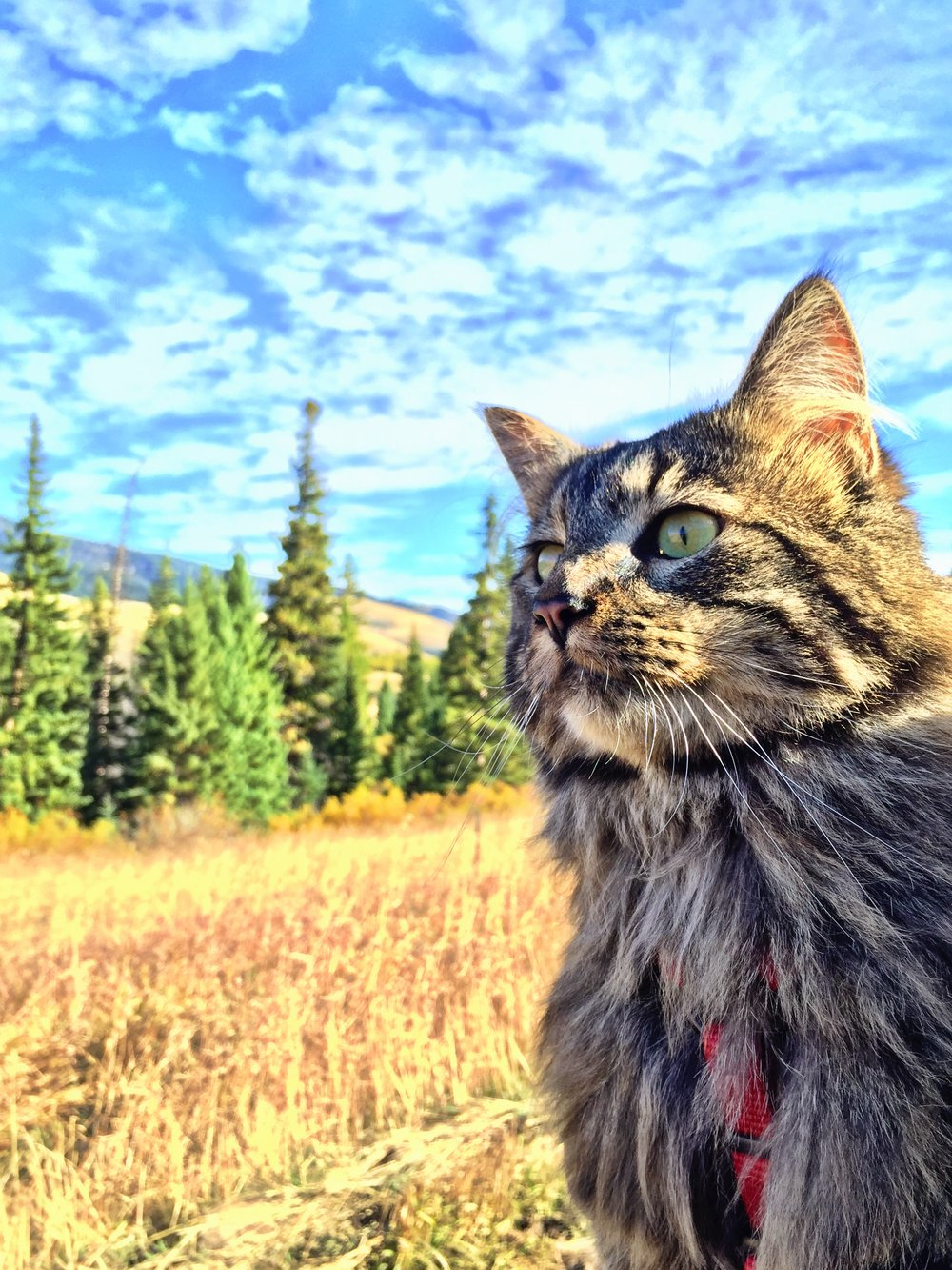 Which is more majestic – Otie or those trees and sky?!