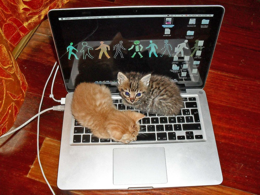 Kitten_Laptop.jpg
