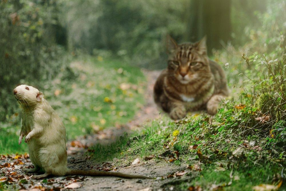 cat-1177483_1920.jpg
