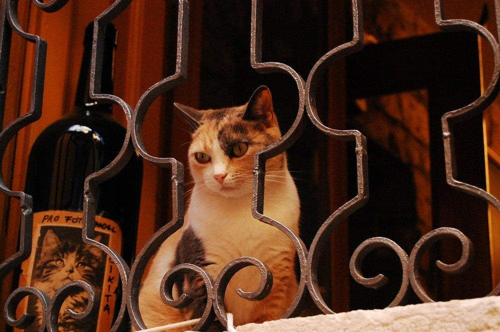 cat-302605_1920.jpg