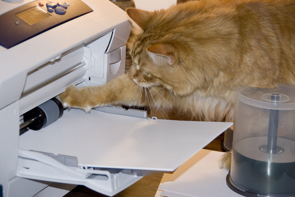 1600px-Gillie_helping_to_jam_the_printer_467241015.jpg