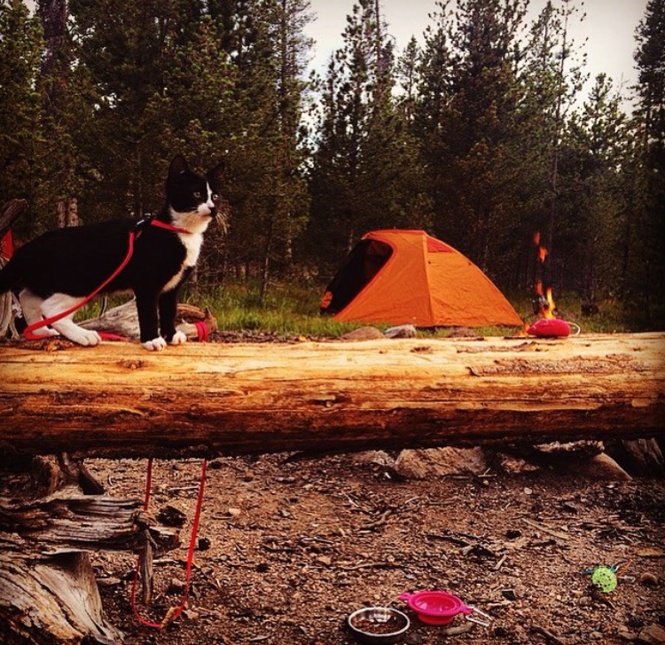 Everything an adventure kitty could want: a roaring fire, a tent, food/water, and my mousey!!