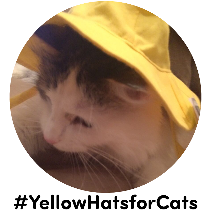 YellowHatsforCats.png