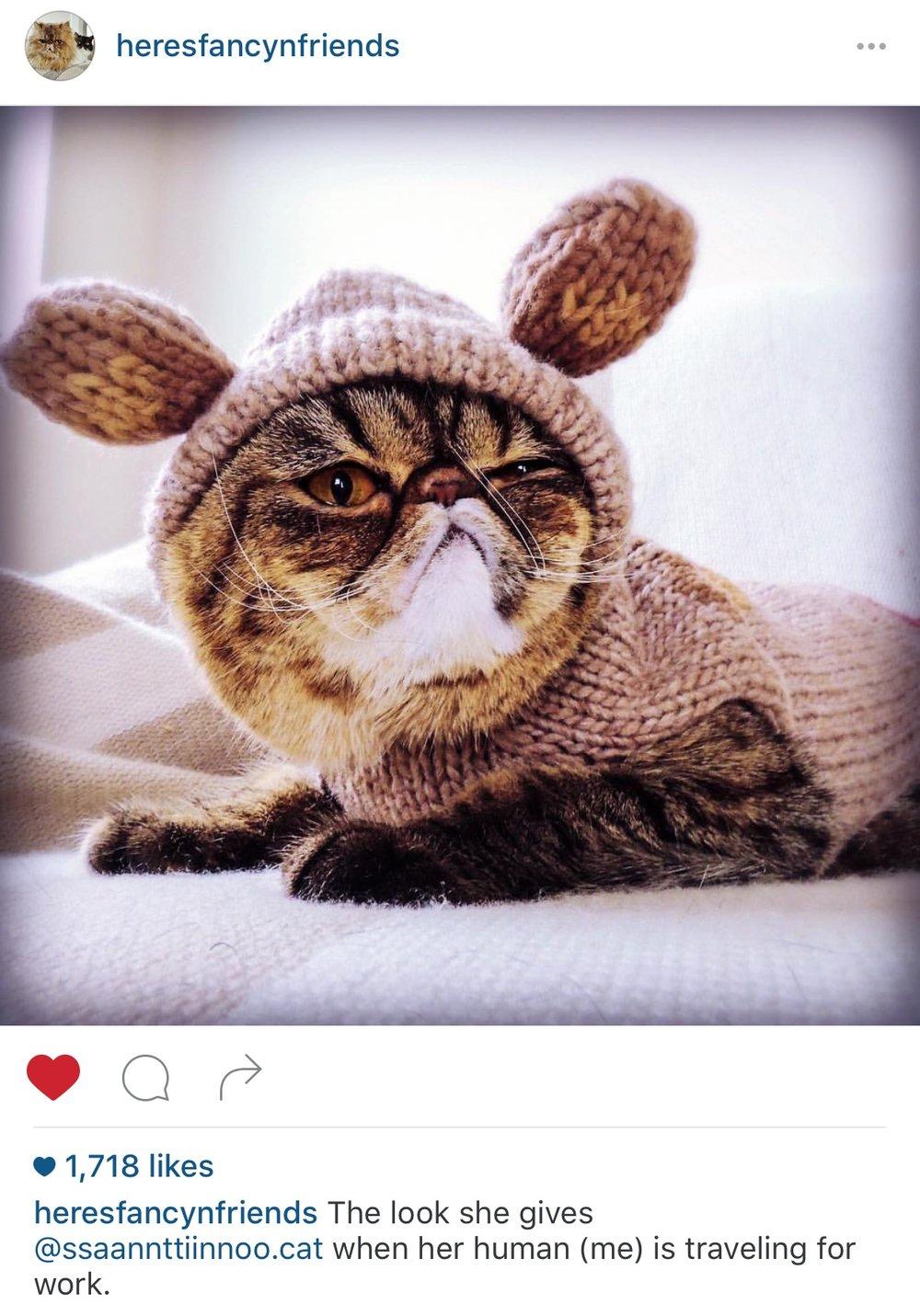 heres-fancy-cat