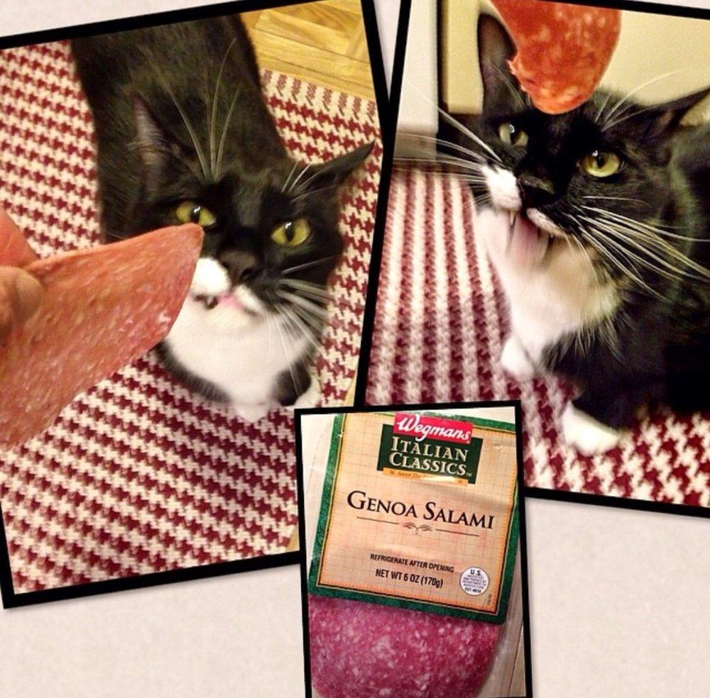 I can has salami?!???!??