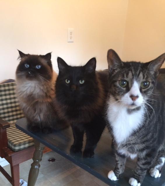 A handsome crew!