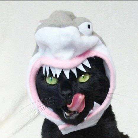 Shark Week SHOULD be a holiday….
