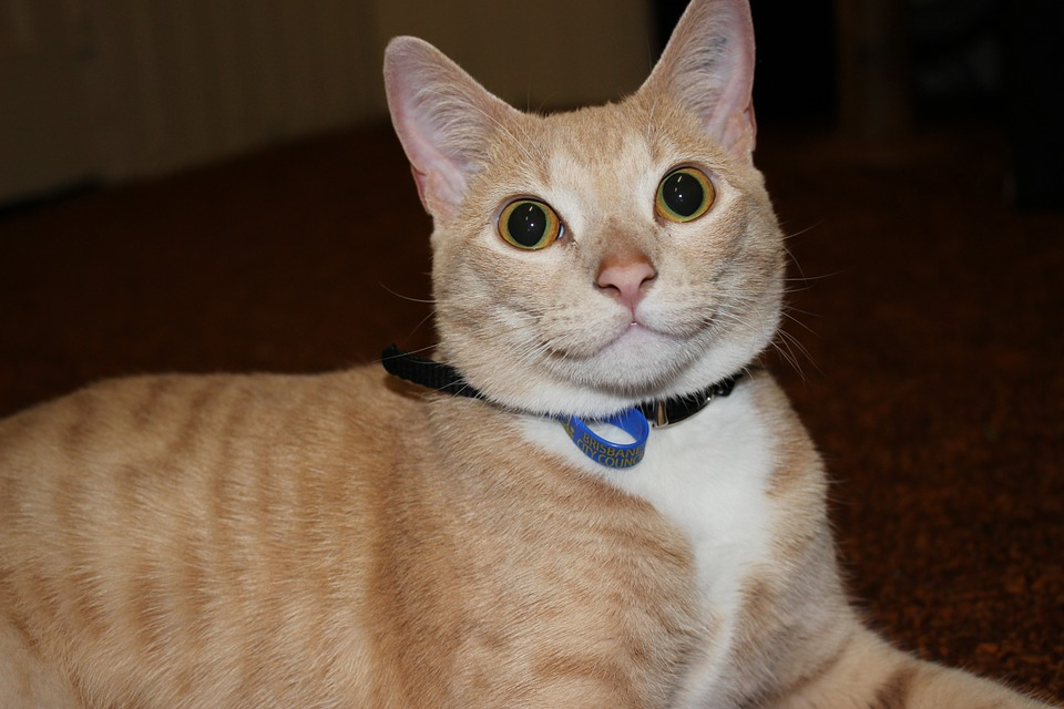 cats-266296_960_720.jpg
