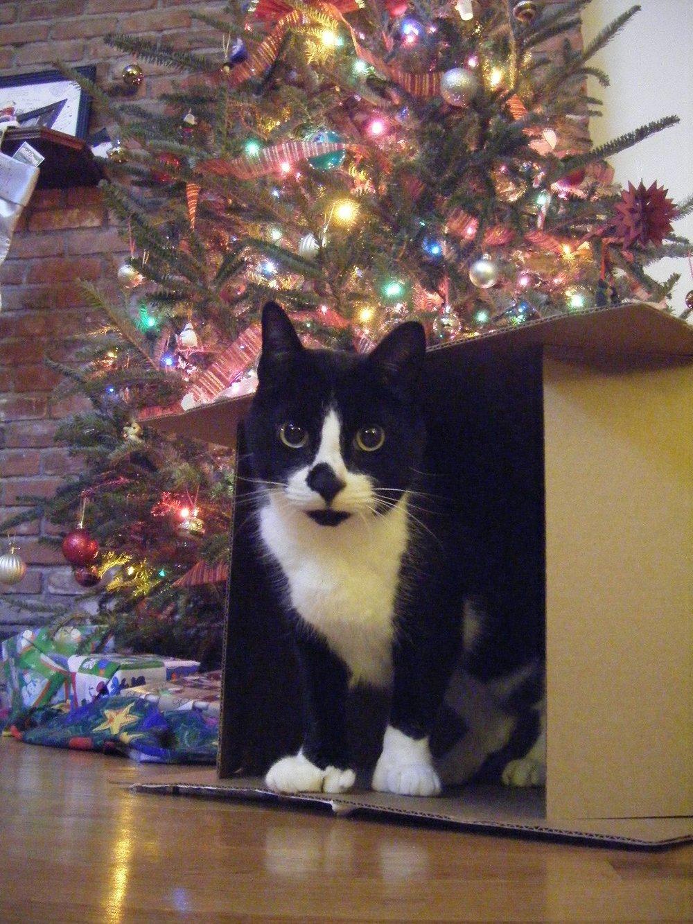 Christmas Fort