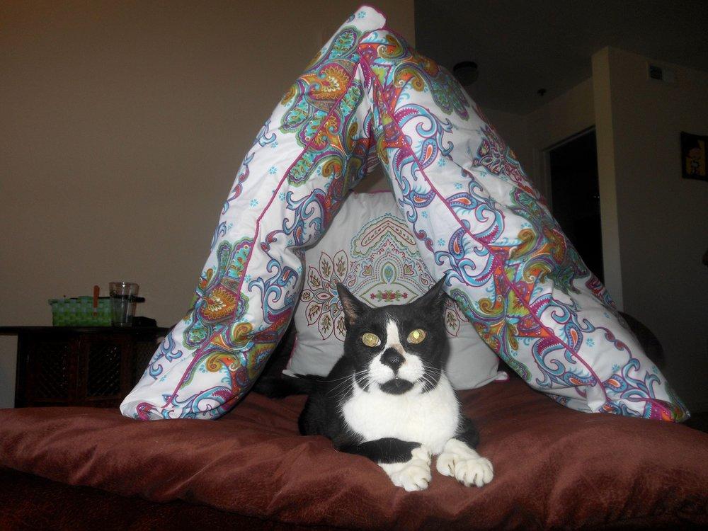 Pillow Fort ….