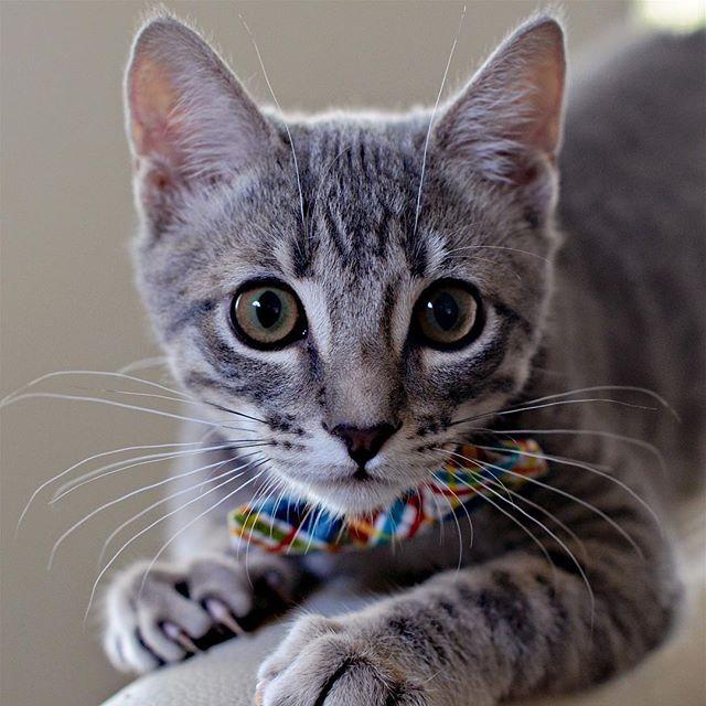 porter-ranch-cat