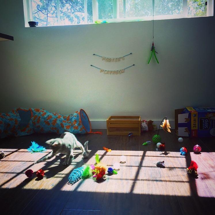 Porter's Playroom